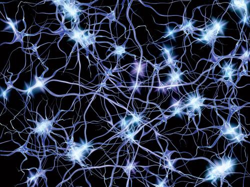 AI neural net